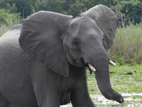liwonde-malawi-africa-safari-elephant-davidsbeenhere