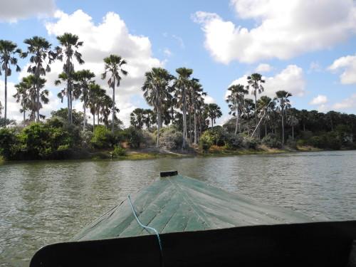 River_Safari_Liwonde_Malawi_Africa