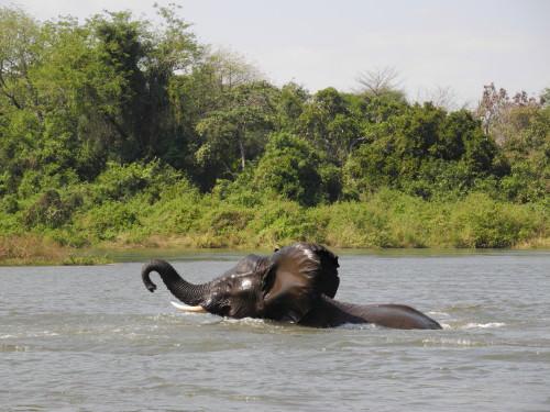 Majete_Wildlife_Reserve_Malawi_Africa
