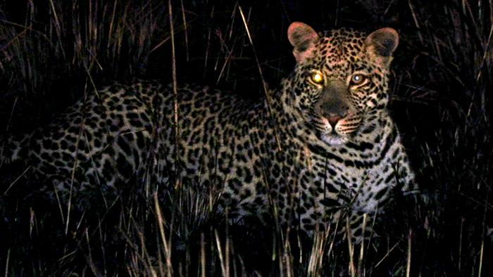 Wildlife_of_Malawi_Africa