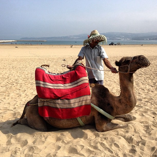 Tangier_Morocco_Africa_Camel
