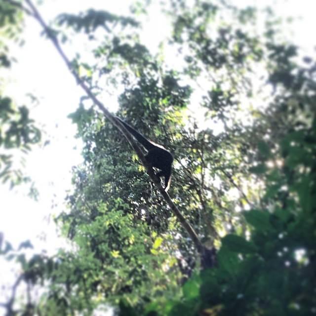 Gibbins_Khao_Yai_National_Park_Thailand