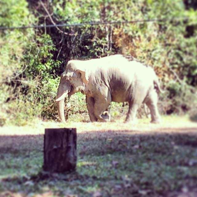 Khao_Yai_National_Park_Thailand_Elephant