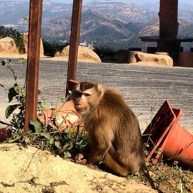 Khao_Yai_National_Park_Thailand_Monkey