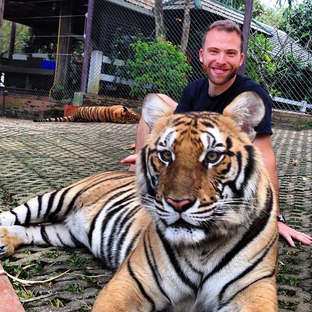 Chiang_Mai_Thailand_Tiger_Kingdom