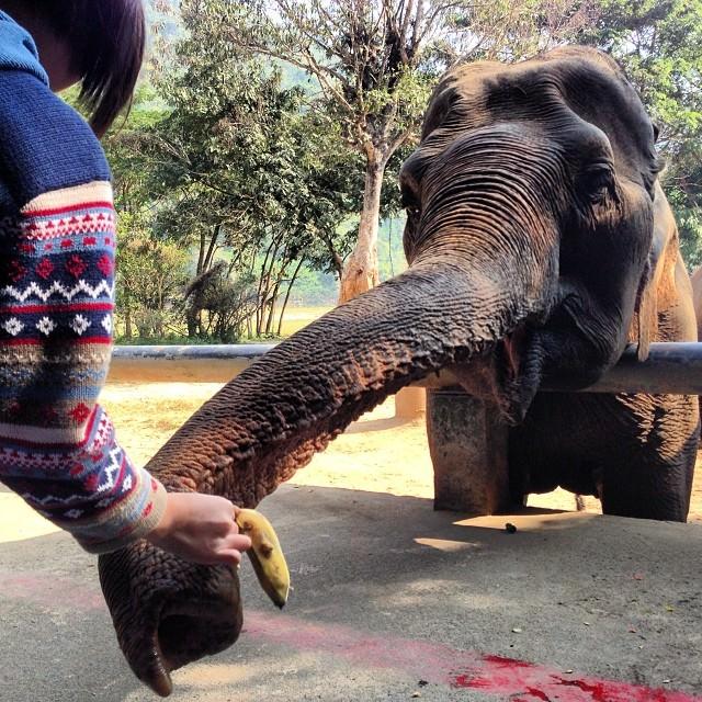Chiang_Mai_Thailand_Elephant_Nature_Park