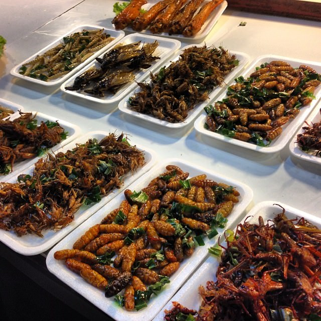 Chiang_Rai_Thailand_Night_Market_Bugs