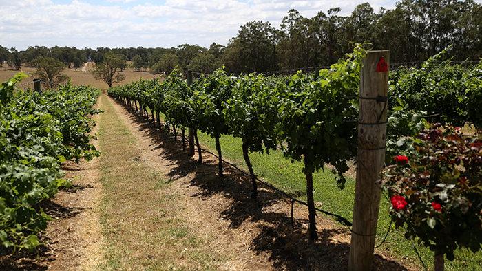 Hunter_Valley_NSW_Australia_Winery