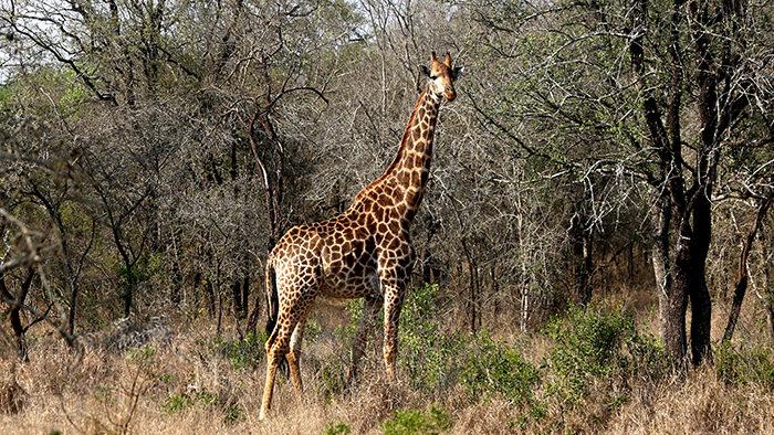 Mbuluzi_Game_Reserve_Swaziland