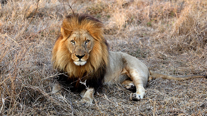 Hlane_Royal_National_Park_Swaziland