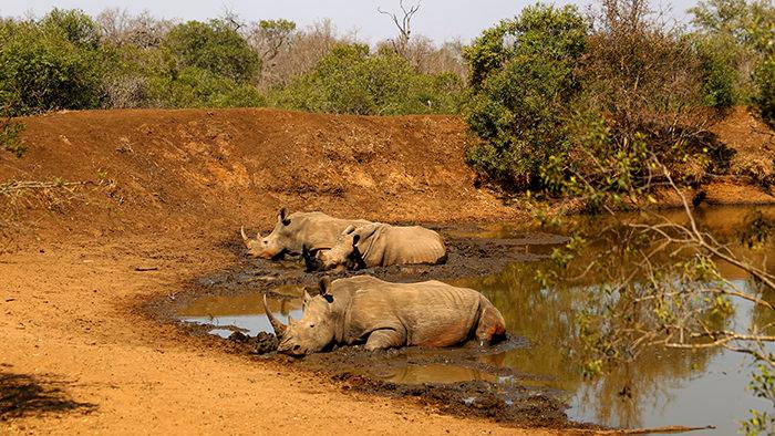 Mkhaya_Game_Reserve_Swaziland