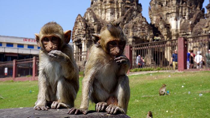 Lopburi_Thailand_Asia_Davidsbeenhere