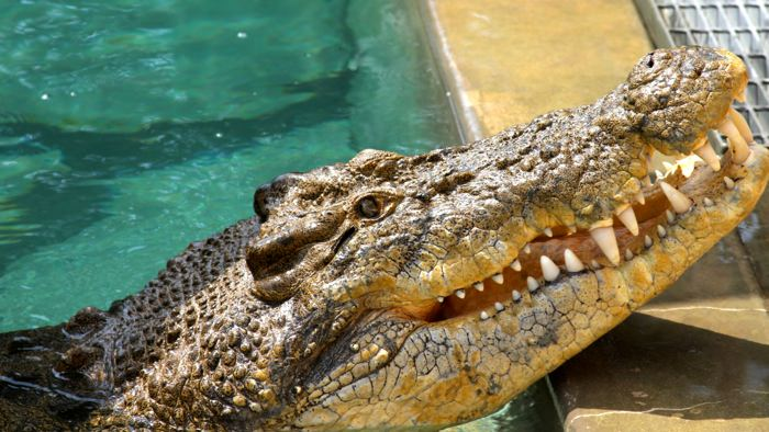 crocosaurus-cove-feeding-davidsbeenhere