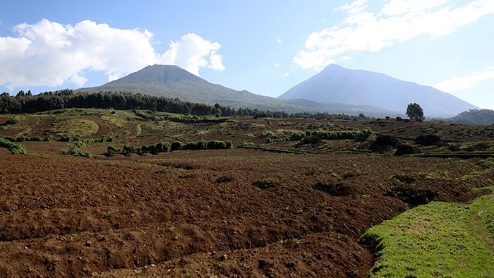 Guide_Gorilla_Trekking_Safaris_Rwanda_Africa_Davidsbeenhere7