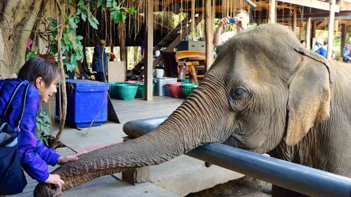 elephant-nature-park-feeding-time-davidsbeenhere