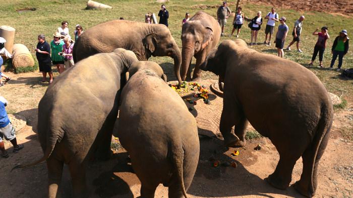 elephant-nature-park-herd-davidsbeenhere