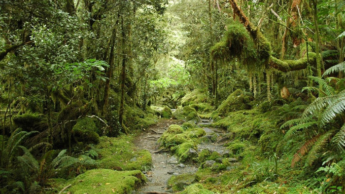 new-zealand-forest-davidsbeenhere