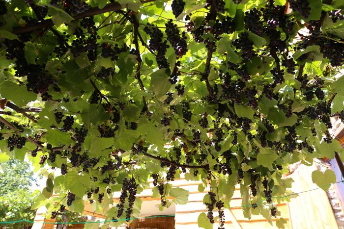 what-to-do-in-bitola-macedonia-davidsbeenhere_Villa_Dihovo2