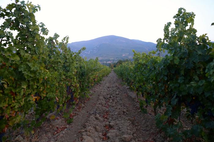 vineyard-povardarie-macedonia-davidsbeenhere