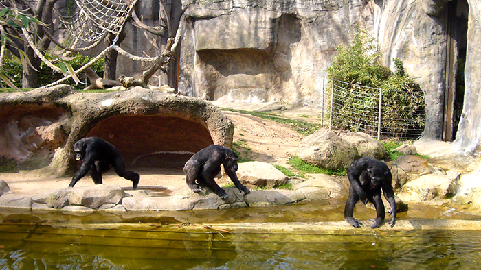 Barcelona_Zoo_Catalunya_Spain_Europe_Davidsbeenhere2