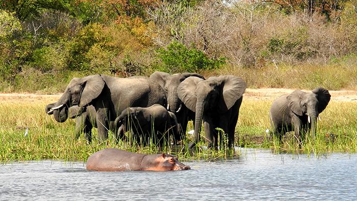 Liwonde_National_Park_Malawi_Africa_Davidsbeenhere