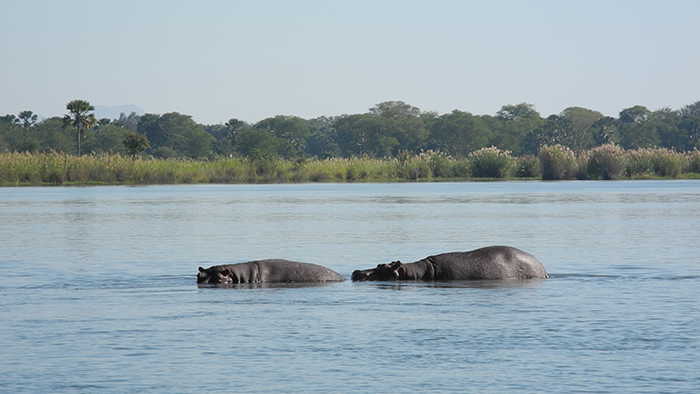 Liwonde_National_Park_Malawi_Africa_Davidsbeenhere3