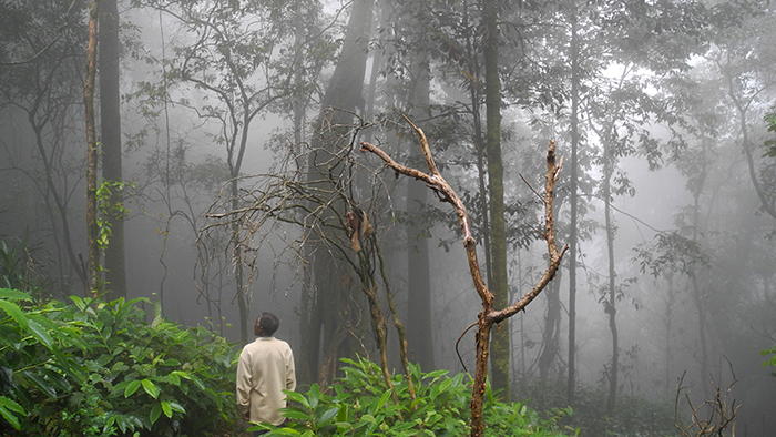 Ntchisi_Forest_Reserve_Malawi_Africa_Davidsbeenhere