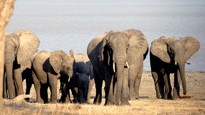 Vwaza_Marsh_Wildlife_Reserve_Malawi_Africa_Davidsbeenhere