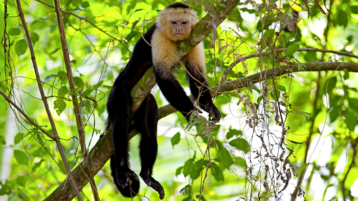 Manuel_Antonio_National_Park_Costa_Rica_Central_America_Davidsbeenhere2
