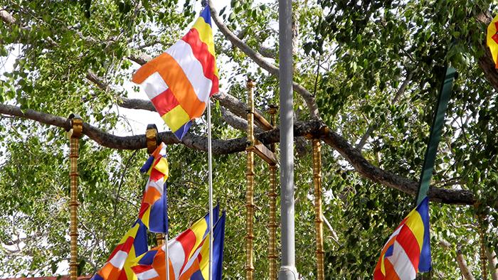 Sacred_Bodhi_Tree_Adnuradhapure_SriLanka_Asia_Davidsbeenhere