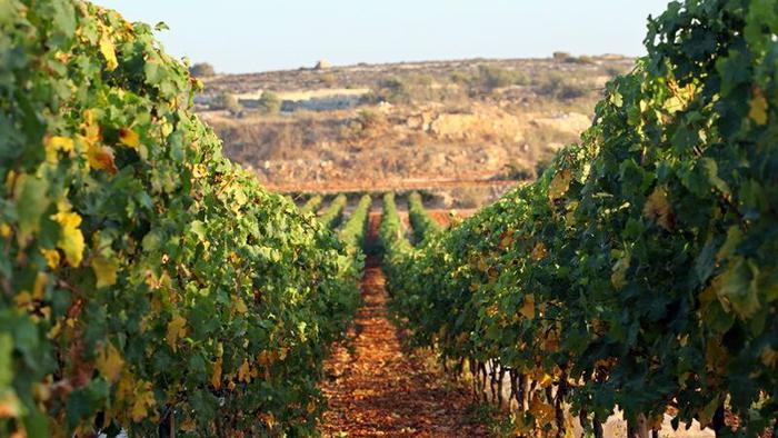 Ta_Mena_Estates_Gozo_Malta_Europe_Davidsbeenhere