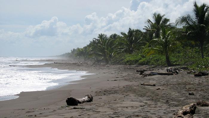 Tortuguero_BEach_Costa_Rica_Central_America_Davidsbeenhere