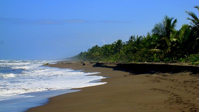 Tortuguero_National_Park_Costa_Rica_Central_America_Davidsbeenhere3