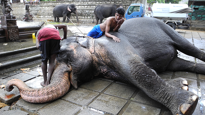 5_things_to_see_in_Kandy_Sri_Lanka_Davidsbeenhere15