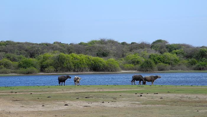 What_to_See_in_yala_national_park_Sri_Lanka_Asia_Davidsbeenhere