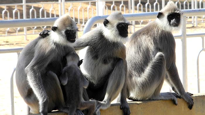 What_to_See_in_yala_national_park_Sri_Lanka_Asia_Davidsbeenhere15