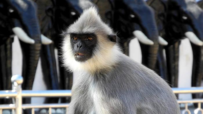 What_to_See_in_yala_national_park_Sri_Lanka_Asia_Davidsbeenhere16