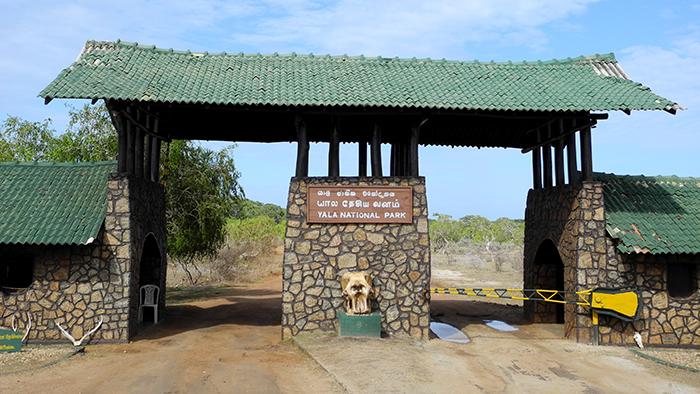 What_to_See_in_yala_national_park_Sri_Lanka_Asia_Davidsbeenhere3