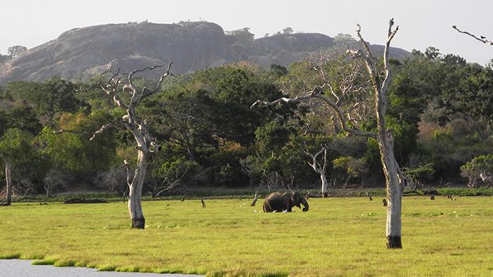 What_to_See_in_yala_national_park_Sri_Lanka_Asia_Davidsbeenhere5