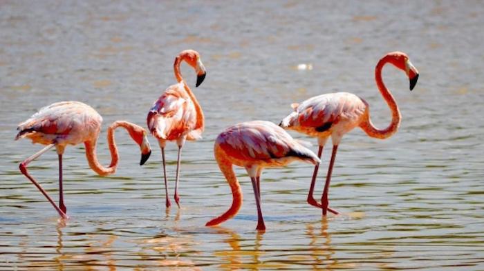 flamingos_mexico